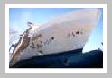 Yeni İnşa Gemiler